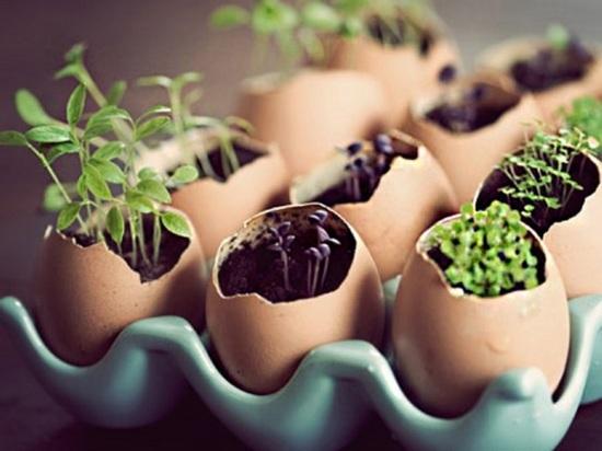 Как выращивать грибы и зелень на балконе