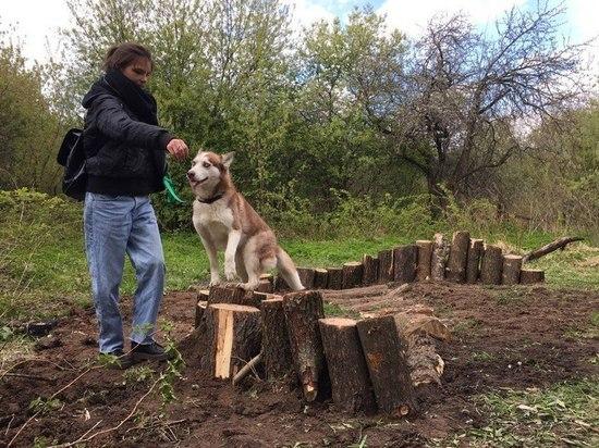 Во Владимире создают собакодром