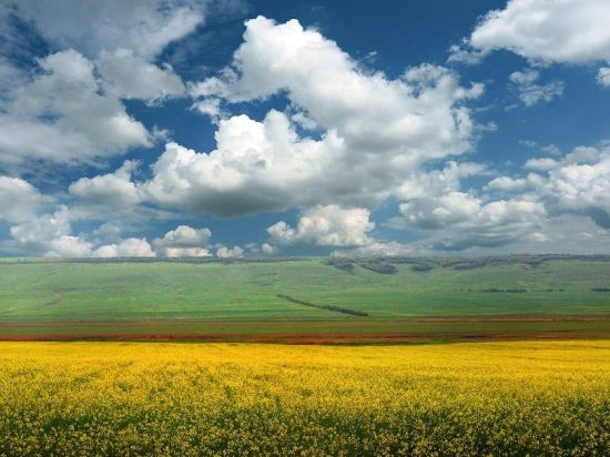 Во Владимирской области в сельхозоборот вовлечено 5 тыс. гектаров неиспользуемой пашни